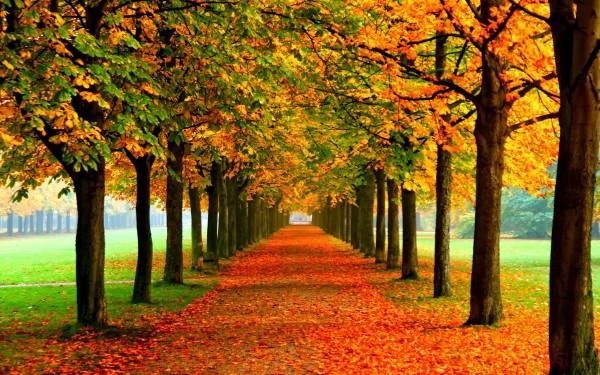 Những con đường mùa thu tuyệt đẹp tại Hàn Quốc và Nhật Bản