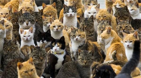 Tham Quan Hòn Đảo Mèo Tại Nhật Bản