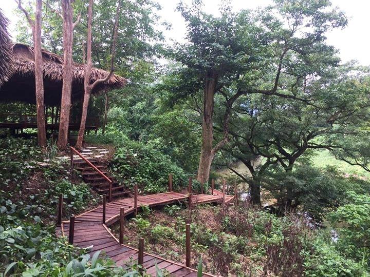 Rừng nguyên sinh vườn quốc gia Phong Nha Kẻ Bàng