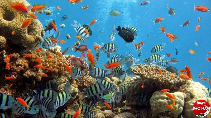 Bạn có biết Indonesia còn những nơi nào để khám phá ngoài Bali -2